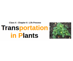 CBSE : Class X : Chapter 6 : Life Process : Explain the process of transportation in plants.
