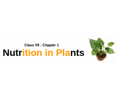 CBSE : Class VII : Science : Chapter 1 : Nutrition in Plants : Summary